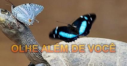 olhe-alem-de-voce-pps