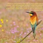 Papel de Parede – Mateus 6.26
