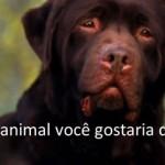 QUE ANIMAL VOCÊ GOSTARIA DE SER?