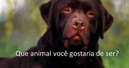 que-animal-voce-gostaria-de-ser-pps