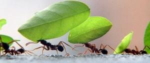 uniao-importancia-do-trabalho-em-equipe