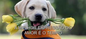 a-melhor-expressao-do-amor-e-o-tempo