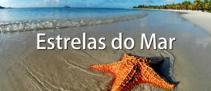 estrelas-do-mar-video