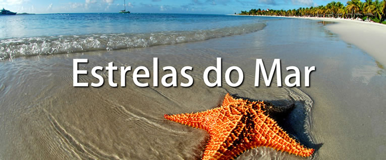 estrelas-do-mar-video